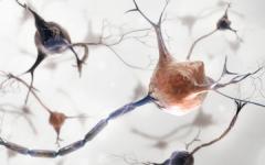 Магнитна стимулация на мозъка
