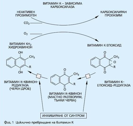 Фиг. 1. Циклично превръщане на витамин К