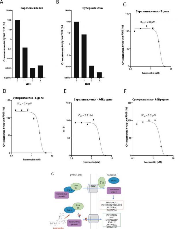 Ивермектин е мощен инхибитор на клинично изолирания SARS-CoV-2 Австралия/VIC01/2