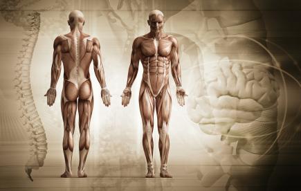 Когато един мускул отслабва, това носи информация какво се случва с цялото тяло